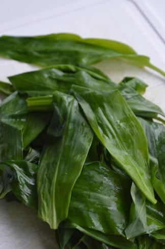 bear garlic leaves
