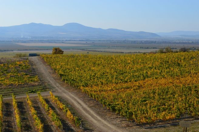 tokaj macik vineyards